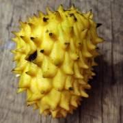 Annona hypoglauca – Climbing Custard Apple