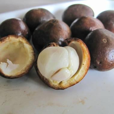 Baccaurea ramiflora – Burmese Grape