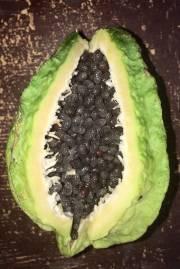 Carica cnidoscoloides – Stinging Papaya