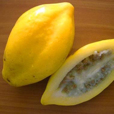 Carica pubescens – Mountain Papaya