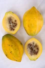 Carica pubescens 'Cundinamarca'