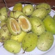 Cucumis dipsaceus – Igel-Gurke