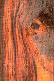 Dalbergia cochinchinenis – Siamese Rosewood
