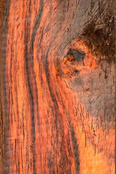 Bombay black wood tree 100 Seeds black rosewood blackwood Dalbergia latifolia