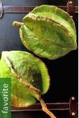 Jacaratia mexicana – Mexican Mountain Papaya