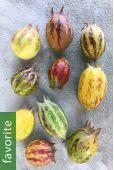 Jarilla heterophylla – Granadina, Jarilla
