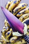 Musa acuminata var. tomentosa – Sulawesi Banana