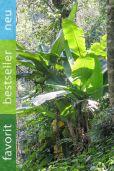 Musa sikkimensis – Darjeeling-Banane