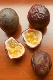 Passiflora edulis f. edulis – Passion Fruit