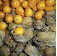 Physalis peruviana – Inca Berry