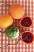 Solanum bicorne
